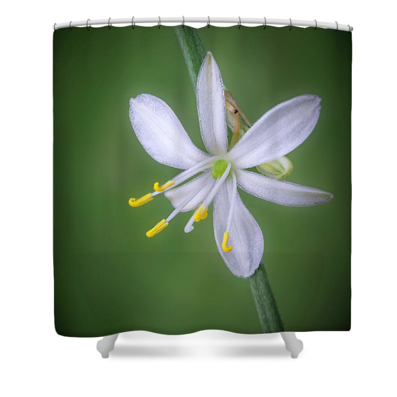 Abstract Shower Curtain featuring the photograph White Flower by Lynn Geoffroy