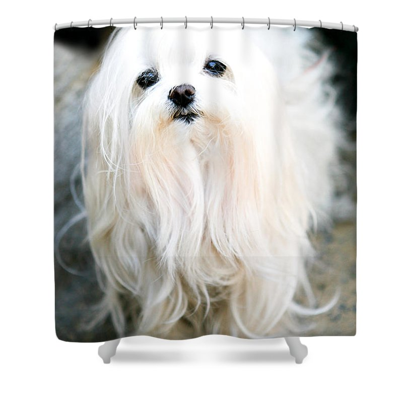Small Shower Curtain featuring the photograph White Fluff by Marilyn Hunt