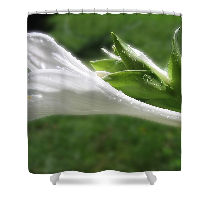 White Hosta Flower Shower Curtain featuring the photograph White Hosta Flower 46 by Maciek Froncisz