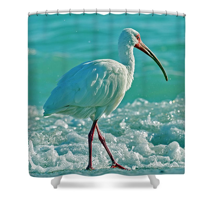 Ibis Shower Curtain featuring the photograph White Ibis Paradise by Betsy Knapp