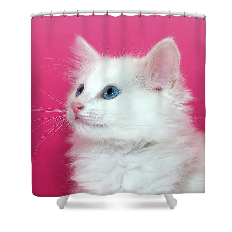 Adorable Shower Curtain featuring the photograph White Kitten On Pink by Sheila Fitzgerald