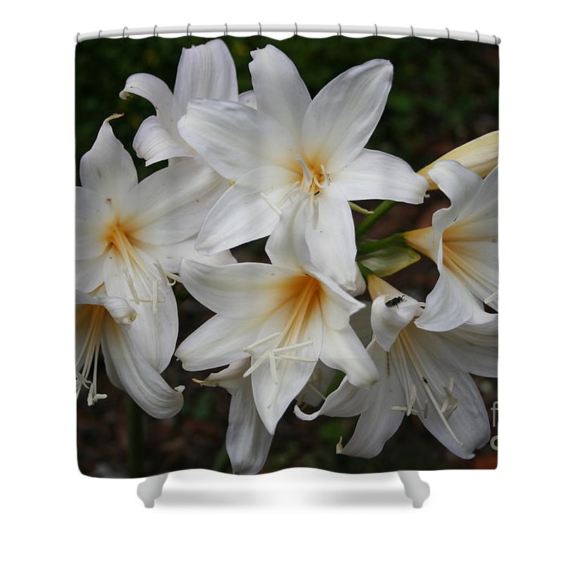 Lillies Shower Curtain featuring the photograph White Lilies by Christiane Schulze Art And Photography