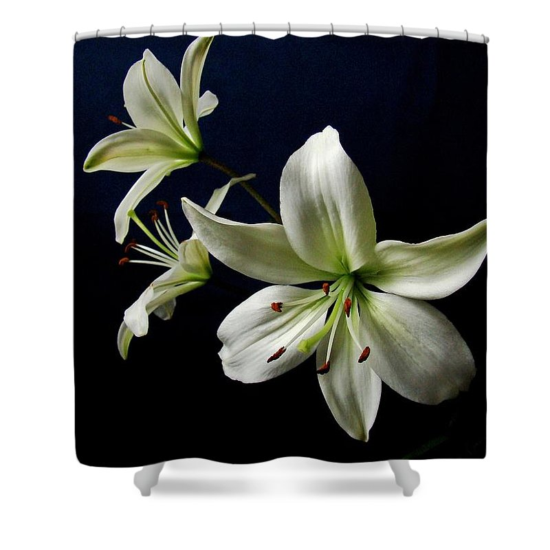 White Lilies Shower Curtain featuring the photograph White Lilies On Blue by Sandy Keeton