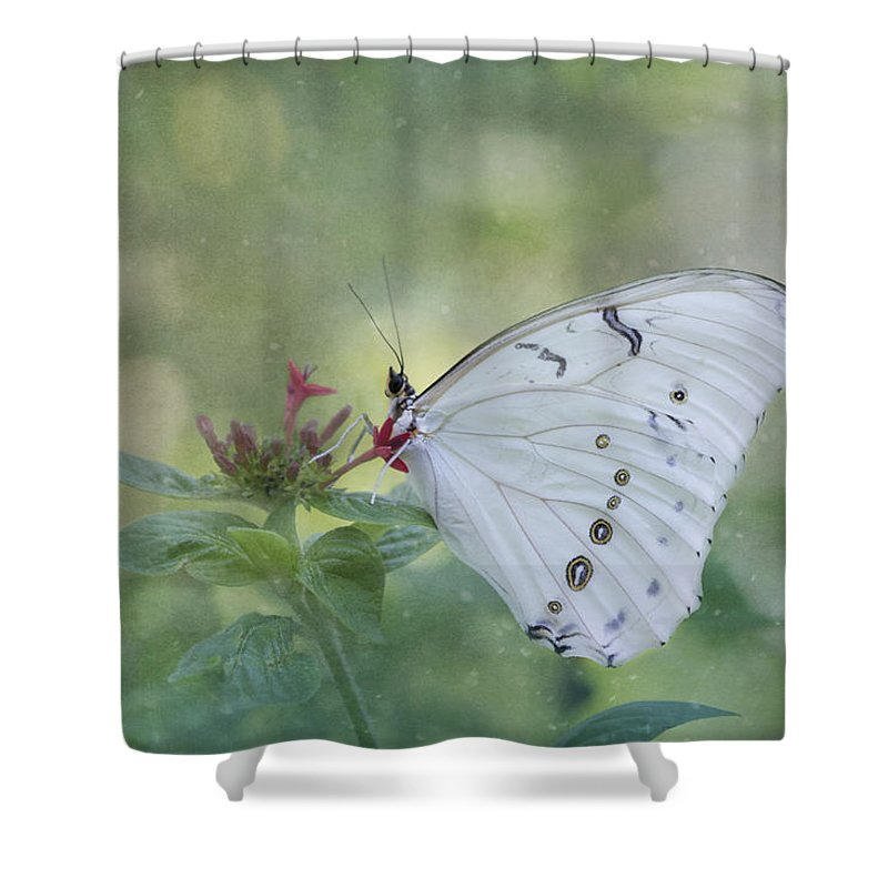 Butterfly Shower Curtain featuring the photograph White Morpho Butterfly by Kim Hojnacki