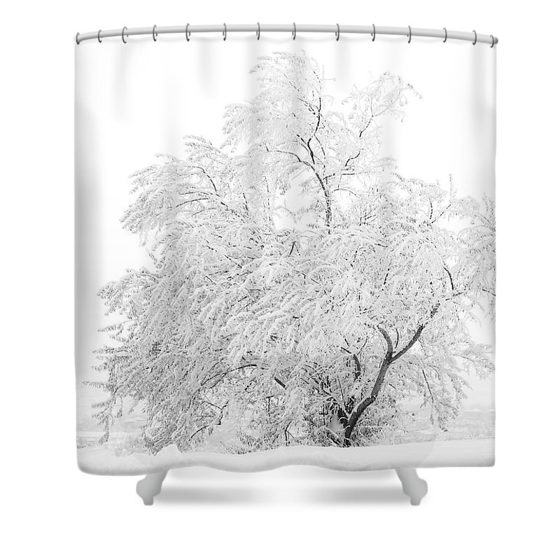 Snow Shower Curtain featuring the photograph White on White by Marilyn Hunt