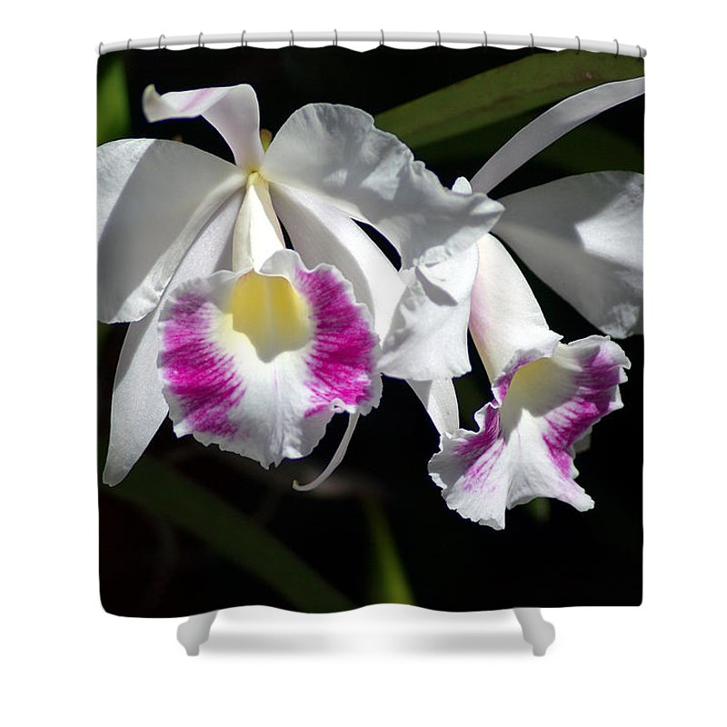 Photography Shower Curtain featuring the photograph White Orchids by Susanne Van Hulst