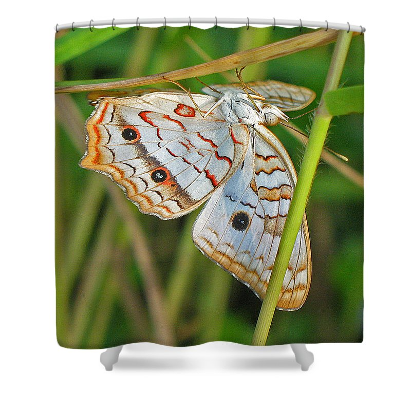 Butterfly Shower Curtain featuring the photograph White Peacock Butterfly by Kenneth Albin