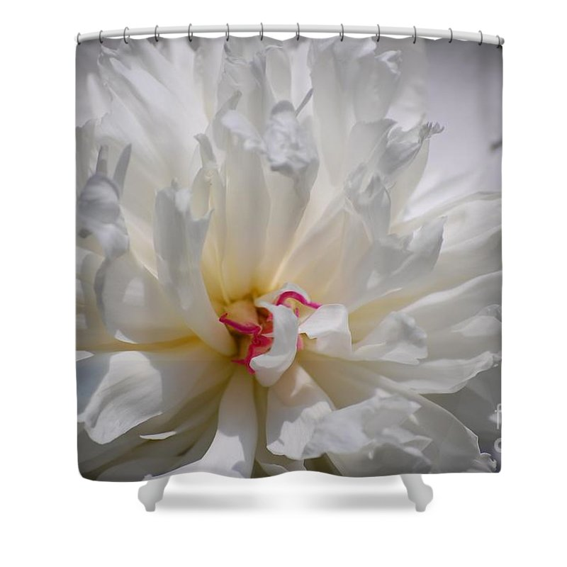 Digital Photography Shower Curtain featuring the photograph White Peony by David Lane