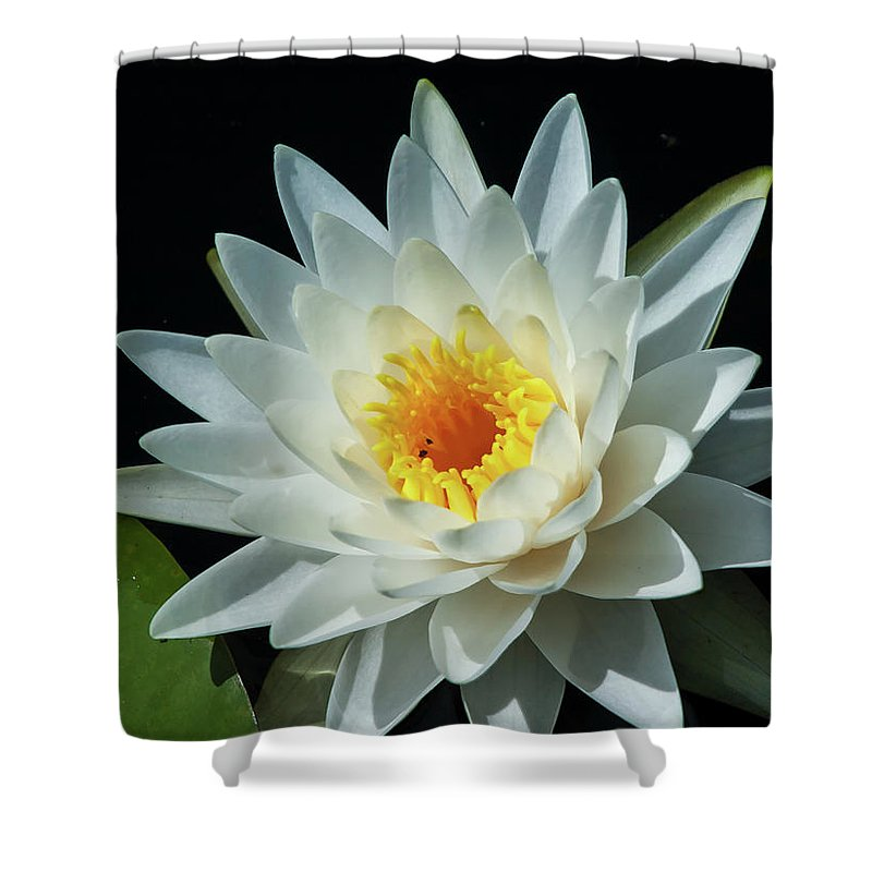 Nature Shower Curtain featuring the photograph White Pond Lily by Arthur Dodd