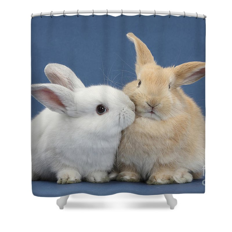 Nature Shower Curtain Featuring The Photograph White Rabbit And Sandy By Mark Taylor