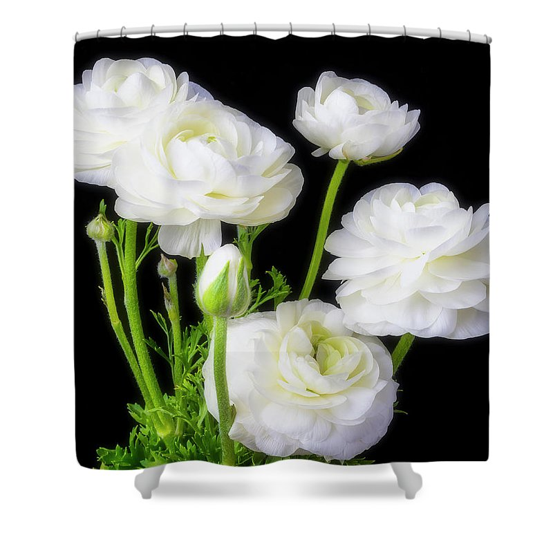 White Ranunculus Flowers Shower Curtain For Sale By Garry Gay