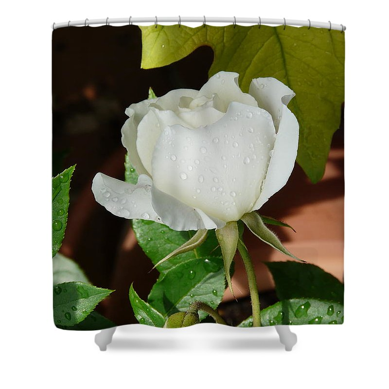 Rose Shower Curtain featuring the photograph White Rose After Rain 1 by Valerie Ornstein