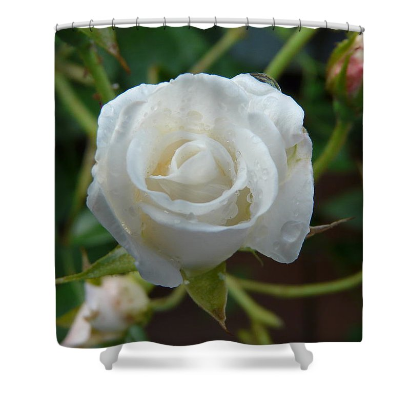 Rose Shower Curtain featuring the photograph White Rose After Rain 2 by Valerie Ornstein