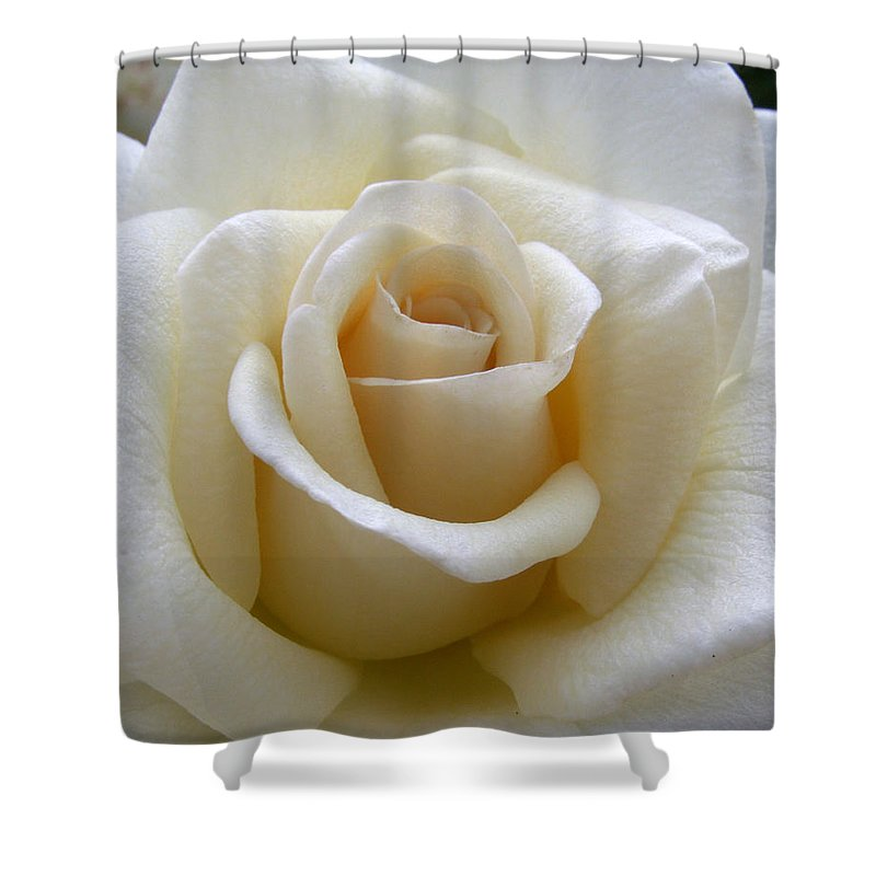 Roses Shower Curtain featuring the photograph White Rose by Amy Fose