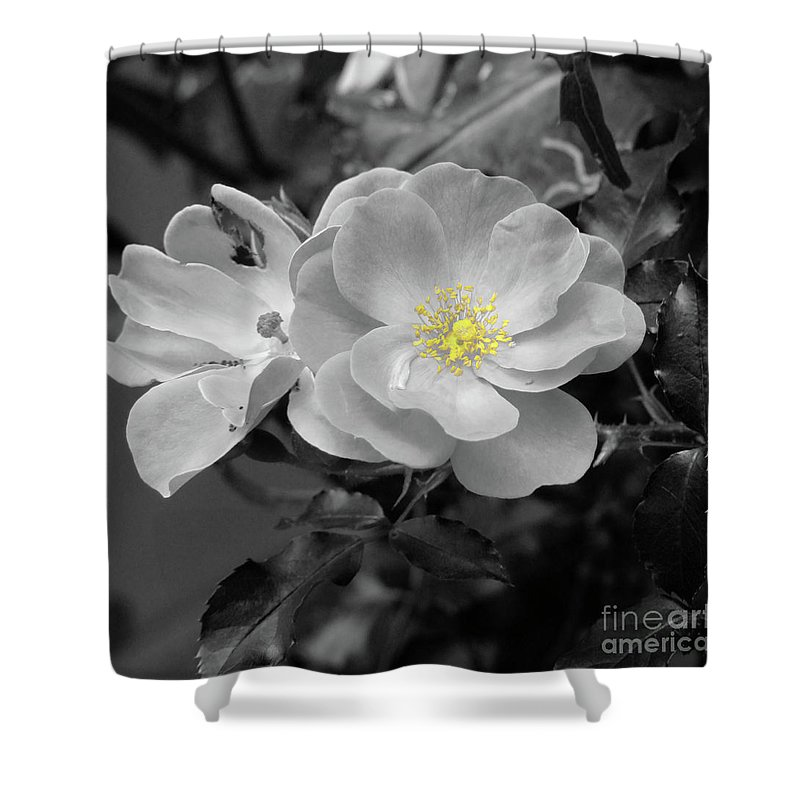 Rose Shower Curtain featuring the photograph White Rose by Karen Lewis
