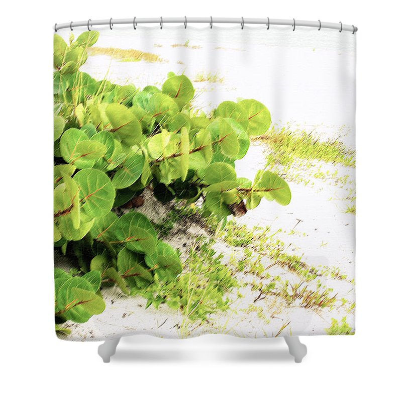 Florida Shower Curtain featuring the photograph White Sand Beach by Ian MacDonald