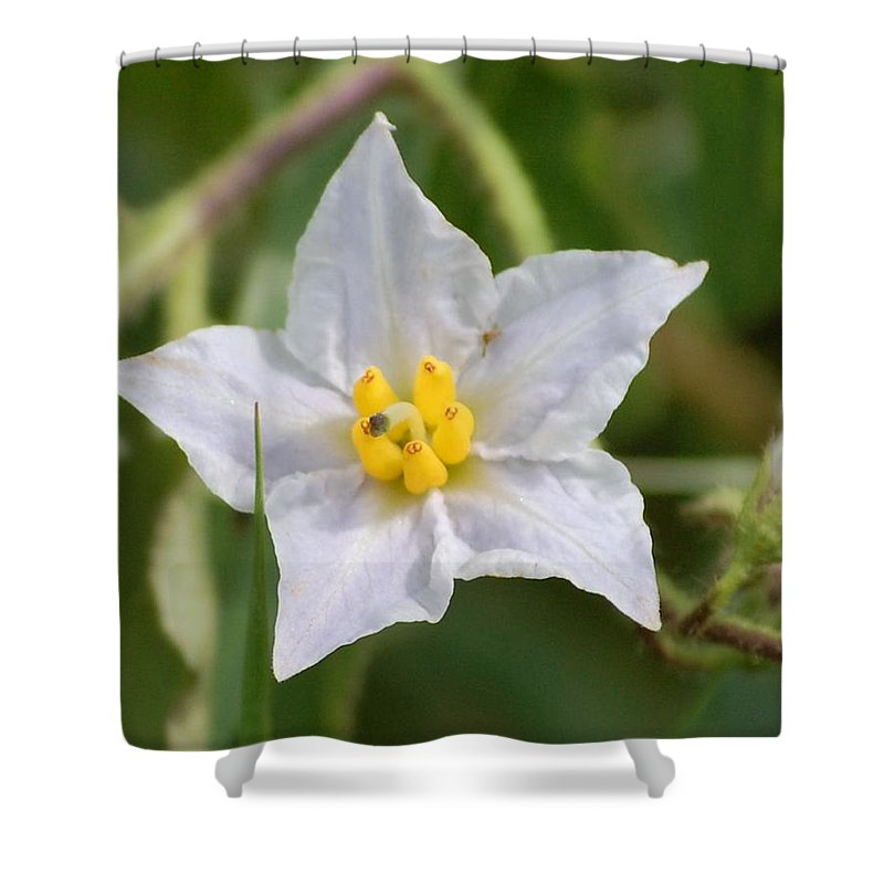 Digital Photo Shower Curtain featuring the photograph White Star by David Lane