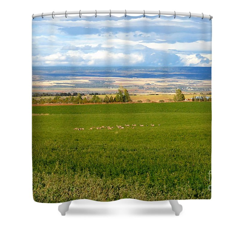 White Tail Deer Shower Curtain featuring the photograph White Tails In The Field by David Lee Thompson