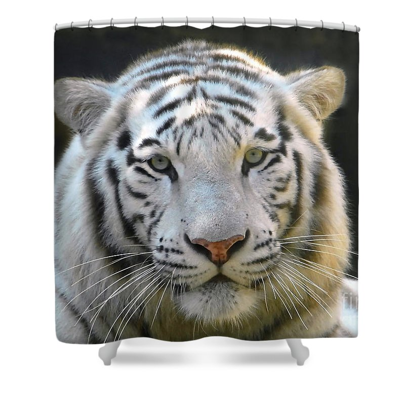 White Tiger Shower Curtain featuring the photograph White Tiger by David Lee Thompson