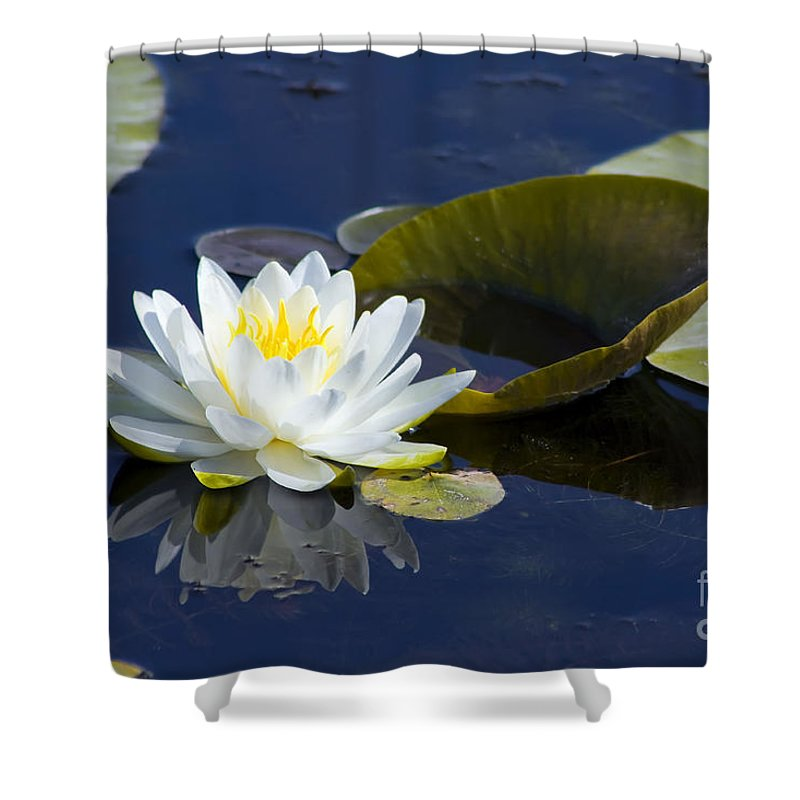 Flower Shower Curtain featuring the photograph White Waterlily by Teresa Zieba