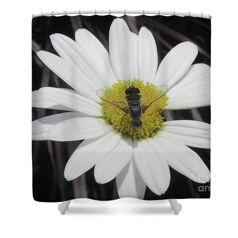 Flower Shower Curtain featuring the photograph White With Bee by Donna Brown