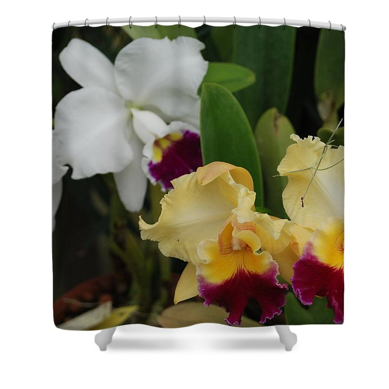 Macro Shower Curtain featuring the photograph White Yellow Orchids by Rob Hans
