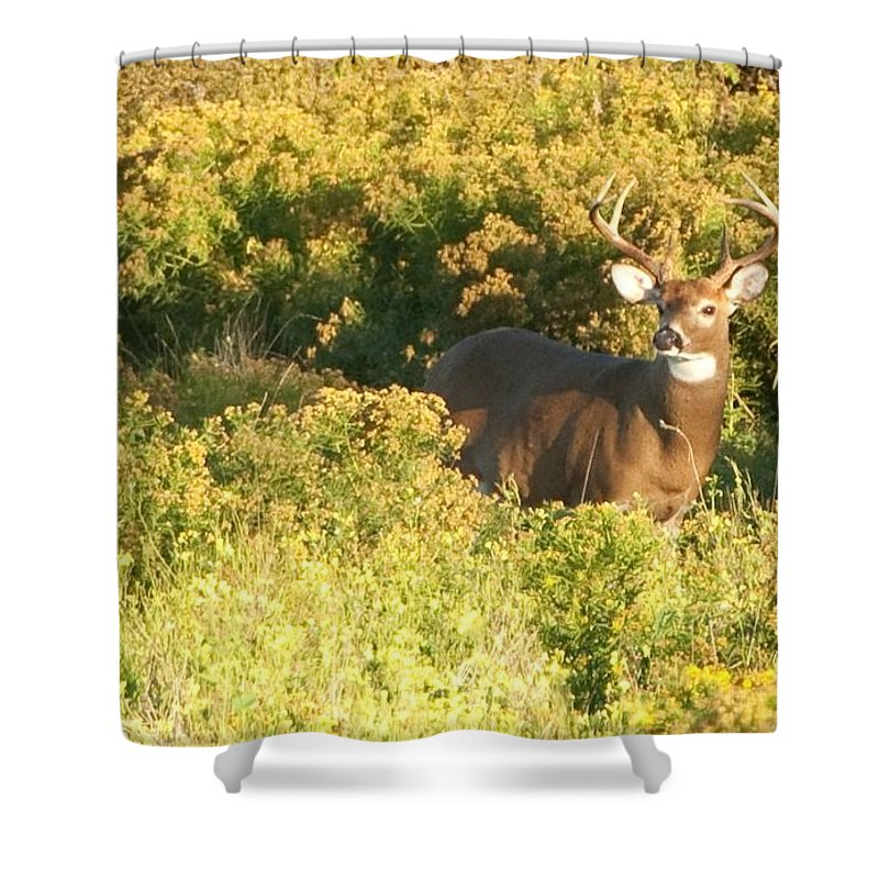 Deer Shower Curtain featuring the photograph Whitetail Buck by Steven Natanson