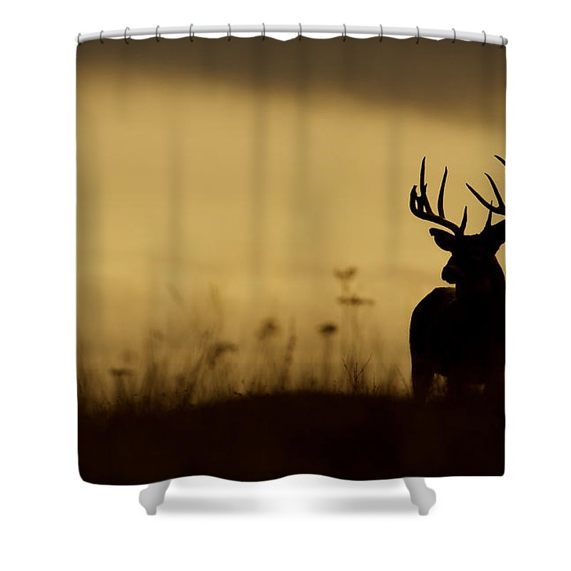 Deer Shower Curtain Featuring The Photograph Whitetail Buck Silhouette By Tom Reichner