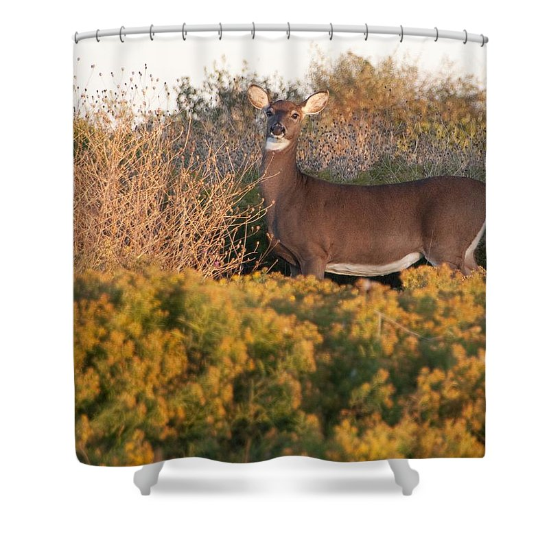 Deer Shower Curtain featuring the photograph Whitetail Doe by Steven Natanson