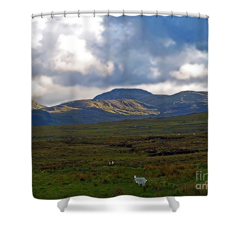 Fine Art Photography Shower Curtain featuring the photograph Who You Lookin' At by Patricia Griffin Brett