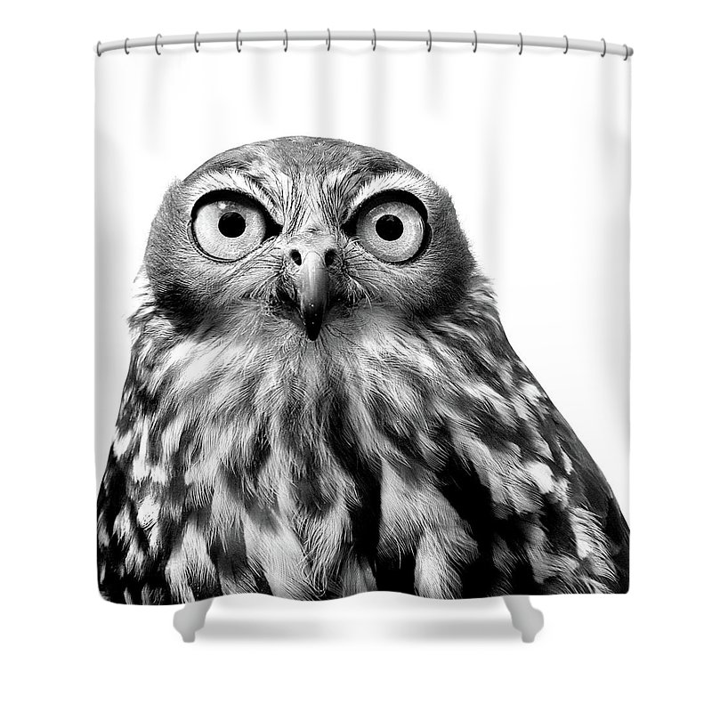 Nature Shower Curtain featuring the photograph Whoo You Callin A Wise Guy by Marion Cullen