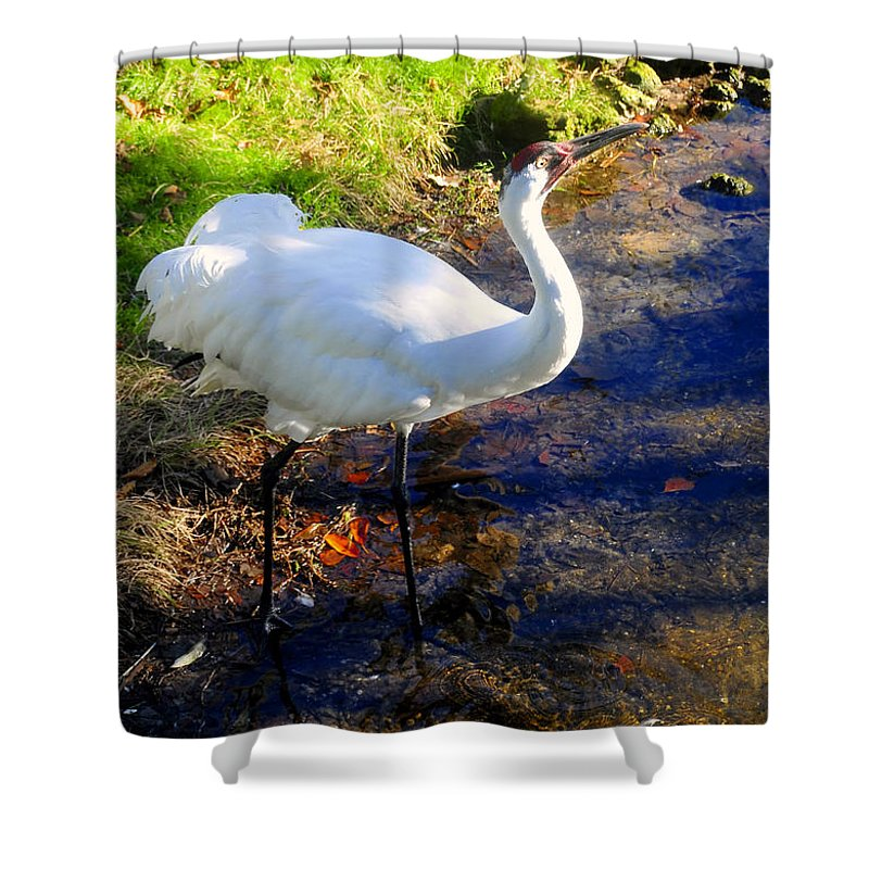 Whooping Crane Shower Curtain featuring the photograph Whooping Crane by David Lee Thompson