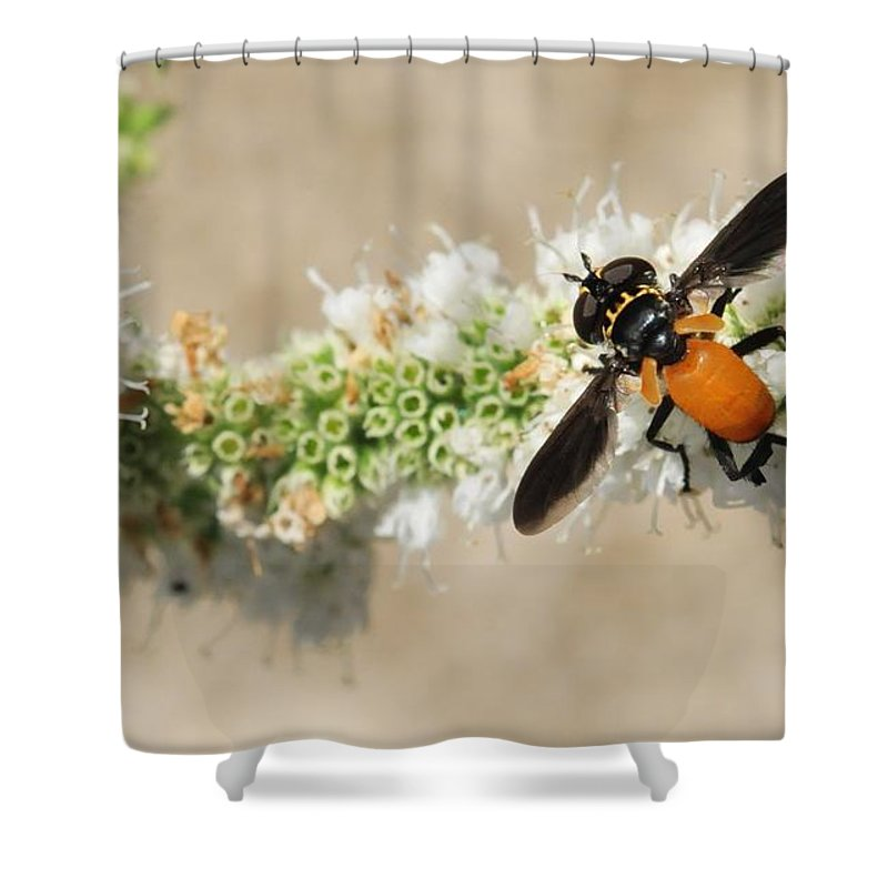 Fly Shower Curtain featuring the photograph Why Fly by Michelle DiGuardi