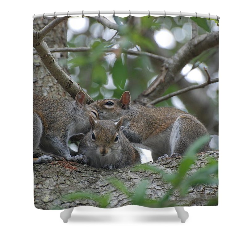 Squirrel Shower Curtain featuring the photograph Why Me by Rob Hans