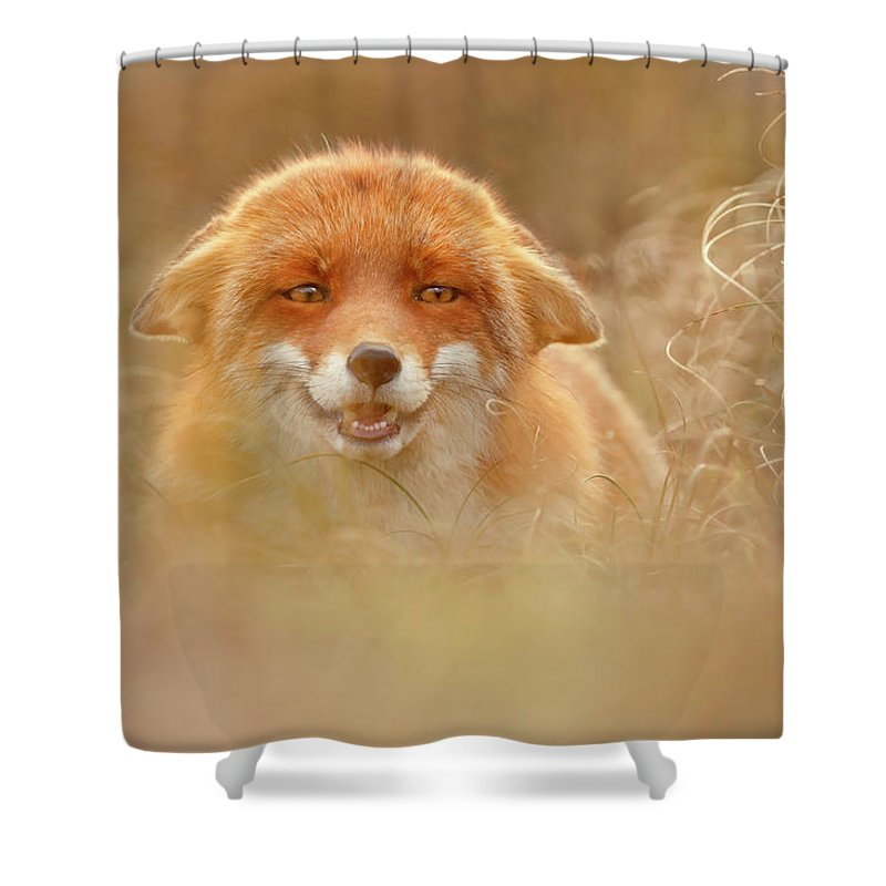 Fox Shower Curtain featuring the photograph Why So Serious - Funny Fox by Roeselien Raimond