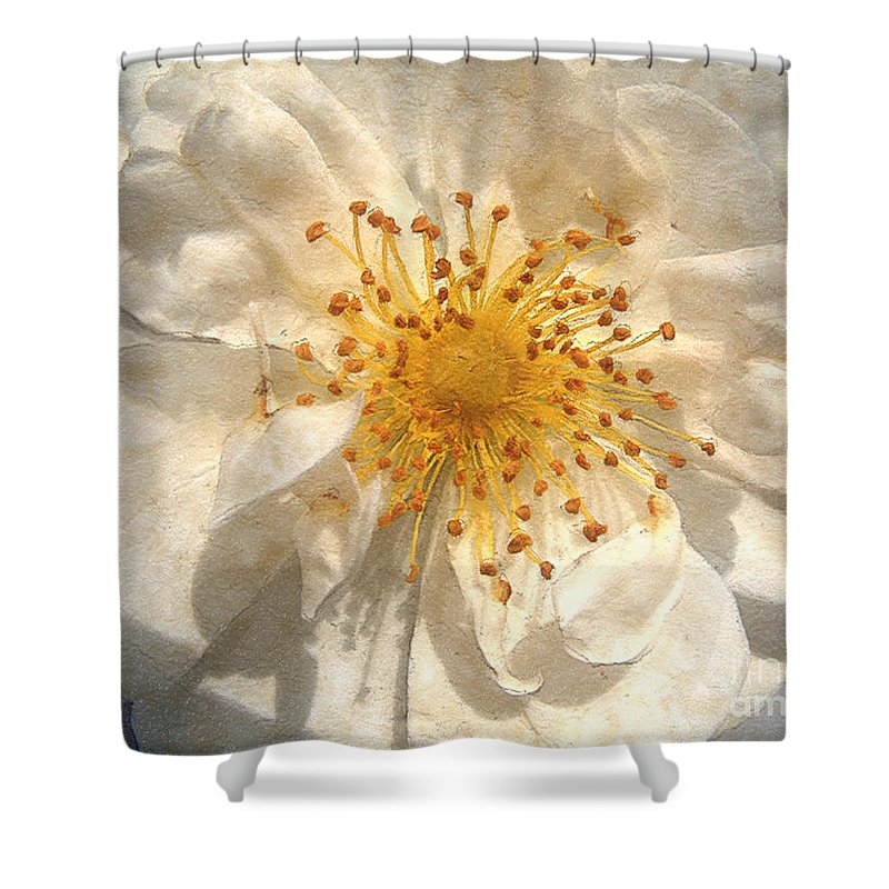 Rose Shower Curtain featuring the painting Wide Open by RC deWinter