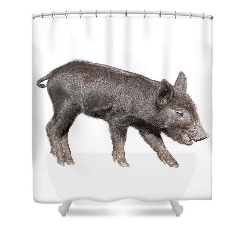 Animal Shower Curtain featuring the photograph Wild Black Piglet by Svetlana Foote