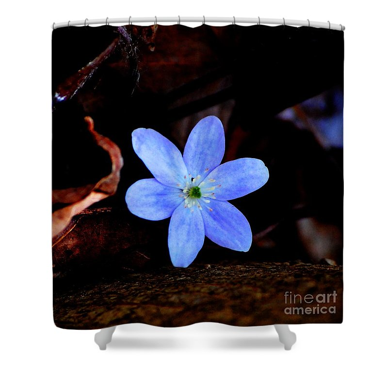 Digital Photo Shower Curtain featuring the photograph Wild Blue by David Lane