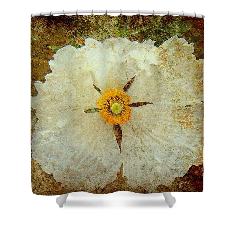 Flowers Shower Curtain featuring the photograph Ivory White Wildflower by Kevin Moore