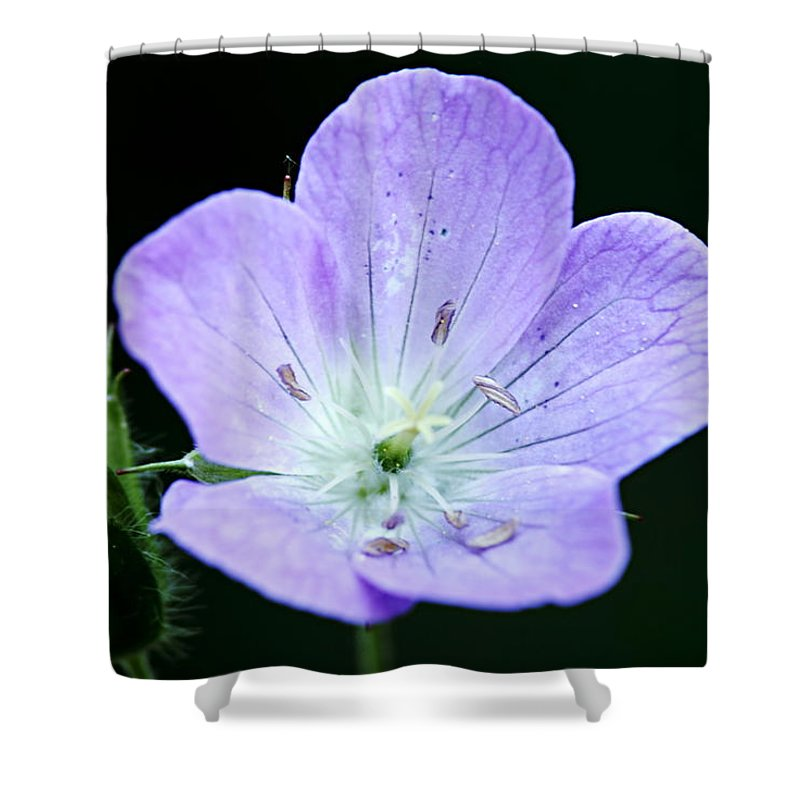 Geranium Shower Curtain featuring the photograph Wild Geranium 2 by Larry Ricker