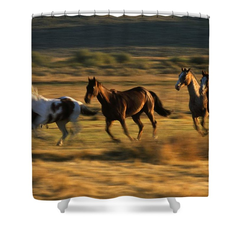 Outdoors Shower Curtain featuring the photograph Wild Horses Running Together by Natural Selection Craig Tuttle