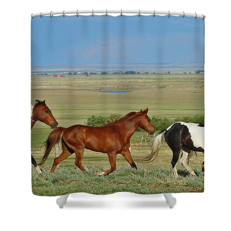 Herd Shower Curtain featuring the photograph Wild Horses Wyoming by Heather Coen