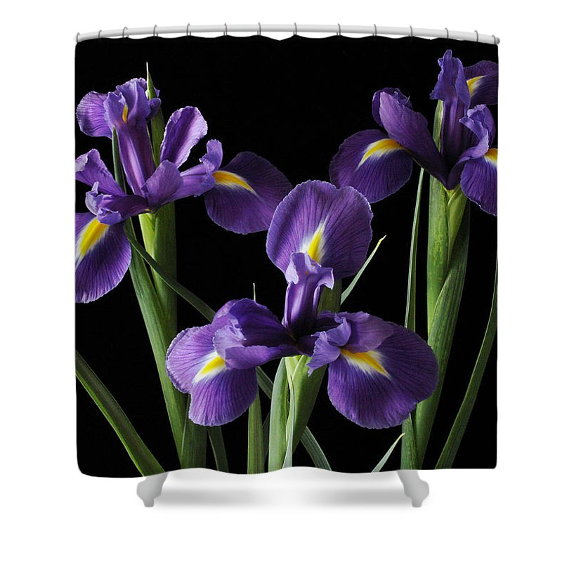 Iris Shower Curtain featuring the photograph Wild Iris by Nancy Griswold