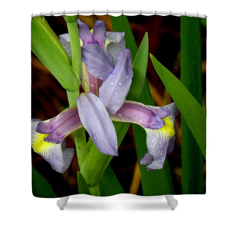 Flowers Shower Curtain featuring the photograph Wild Iris by Rosalie Scanlon