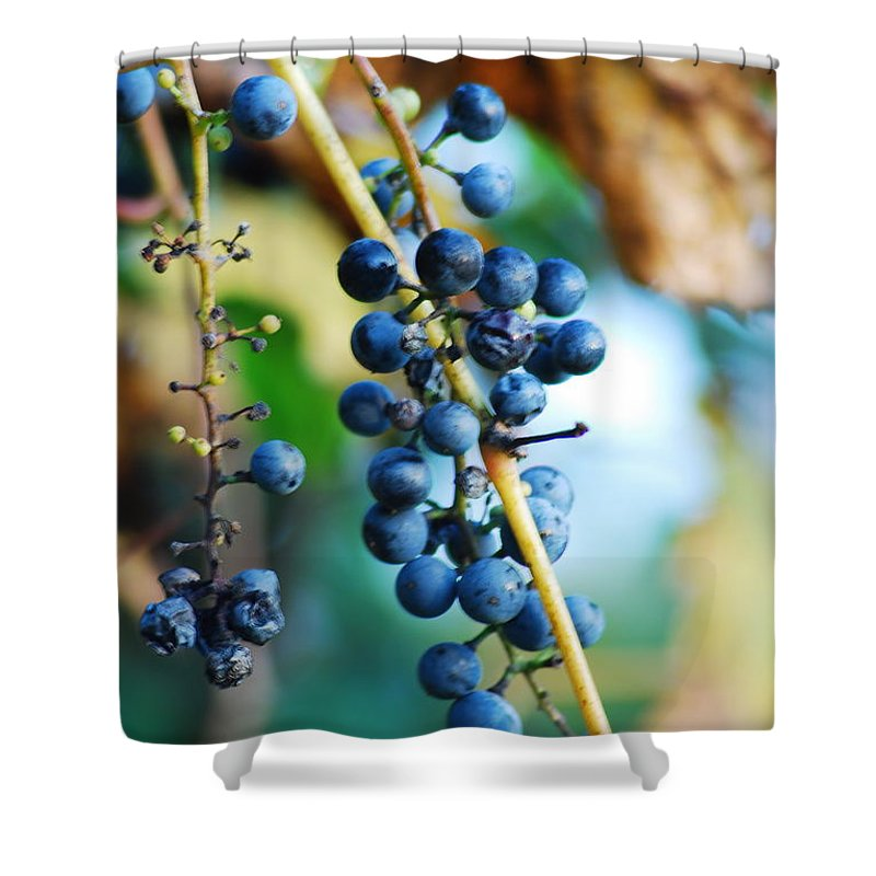 Grapes. Grape Vine Shower Curtain featuring the photograph Wild Michigan Grapes by Michael Peychich
