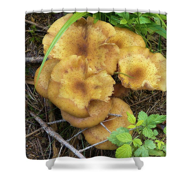 Wild Shower Curtain featuring the photograph Wild Mushrooms 1 by Bernard Barcos