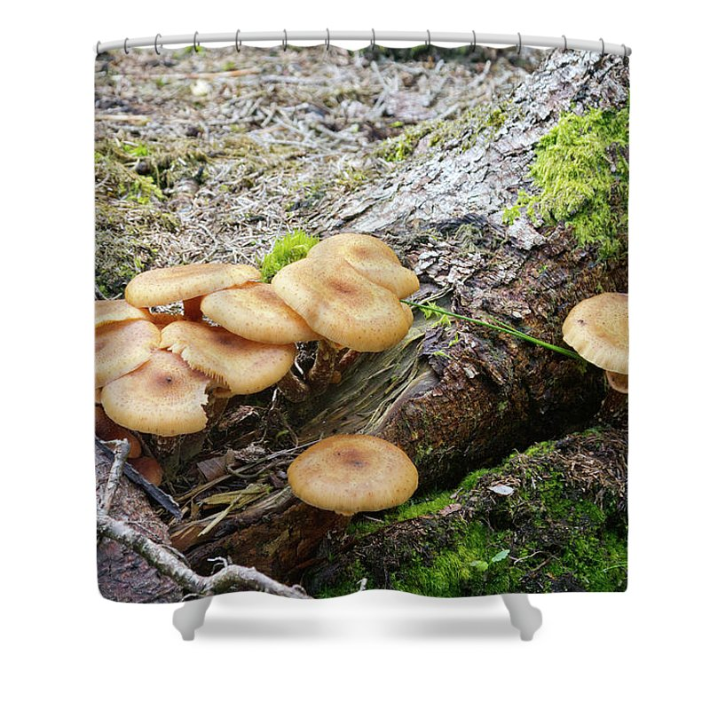 Wild Shower Curtain featuring the photograph Wild Mushrooms 2 by Bernard Barcos