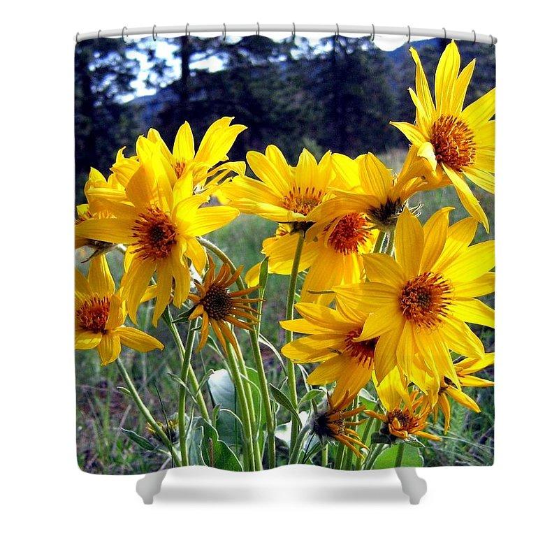 Sunflowers Shower Curtain Featuring The Photograph Wild Okanagan By Will Borden