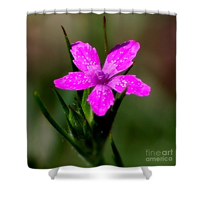Digital Photo Shower Curtain featuring the photograph Wild Pink by David Lane