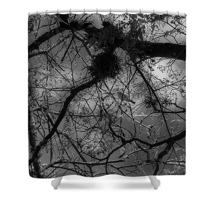 Bird Shower Curtain featuring the photograph Wild Soul by Vinicius Silva Couto